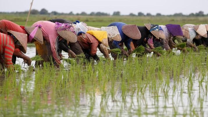 Petani menanam padi di dekat sungai Citarum dekat Muara Gembong, Provinsi Jawa Barat, Indonesia, 22 Februari 2018. REUTERS / Darren Whiteside