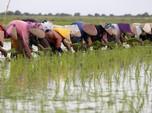 Ada Perang Dagang, Pertanian dan Pertambangan RI Akan Loyo?