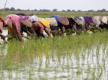 Kadin Dorong Kemitraan Pengusaha - Petani