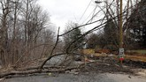 Pohon tumbang karena angin menjadi ancaman besar semasa badai datang. Total lima orang tewas di berbagai kota karena tertimpa pohon. (REUTERS/Yuri Gripas)