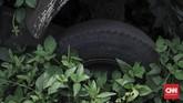 Ada pula bajaj oranye yang diselimuti rumput liar, termasuk di bagian ban. Hampir semua bajaj dalam kondisi rusak berat dan tak terawat. (CNN Indonesia/Adhi Wicaksono)