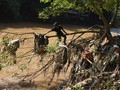 Kronologi Hilang dan Tewasnya Bos Matahari di Ciliwung