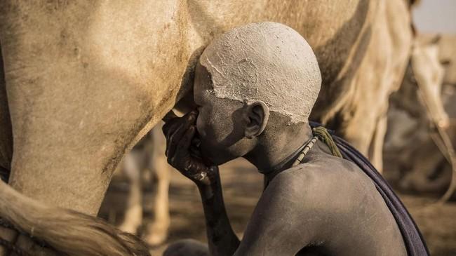 Kini, di pinggir Sungai Nil tersebut, masih ada kemungkinan pertumpahan darah terjadi juga akibat ternak. Bagaimana tidak, ada banyak orang yang kelaparan di tengah padang gersang tersebut. (AFP Photo/Stefanie Glinski)
