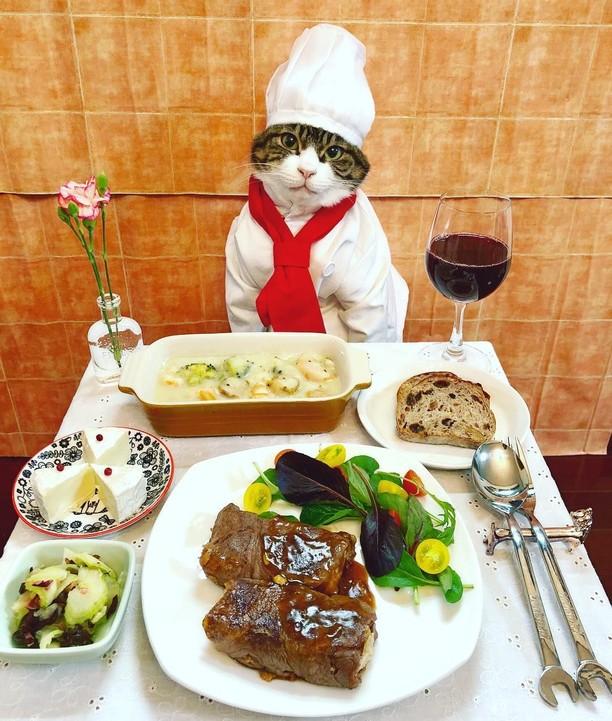 Duh, Genitnya! Kucing Ini Spesial Berdandan untuk Pose dengan Makanan