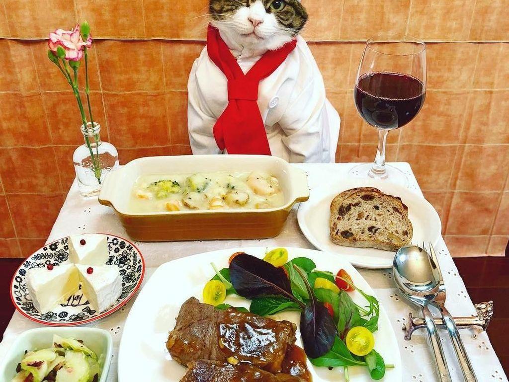 Melalui akun Instagram @rinne172, Maro, kucing jantan berusia 4 tahun ini menjadi model di media sosial dan sering disebut sebagai Cosplay Cat. Foto: Instagram @rinne172