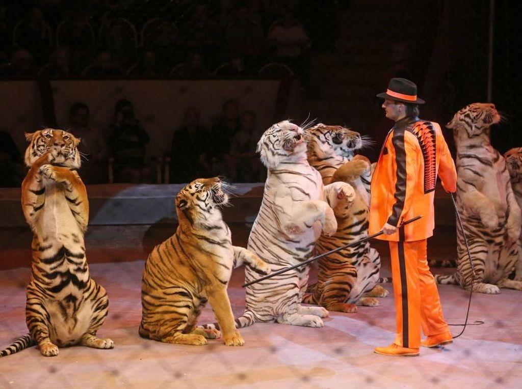 Hal ini dilakukan dengan tujuan bisa memerangi penganiayaan terhadap hewan sirkus yang meluas.