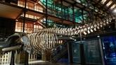Selain itu, museum ini juga mempelajari soal manajerial biodiversitas dan ekologi, sejarah Bumi, kehidupan manusia, dan prasejarah. (AFP PHOTO / Ludovic MARIN)