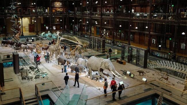 Museum ini juga memiliki misi menyebarkan ilmu naturalis kepada seluruh pengunjung berbagai lapisan melalui serangkaian kegiatan. (AFP PHOTO / Ludovic MARIN)