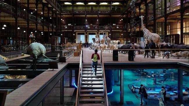The French National Museum of Natural History sejatinya telah ada sejak 1635 pada era Louis XIII. Namun baru pada 1793 setelah Revolusi Perancis, museum ini resmi berdiri. (AFP PHOTO / Ludovic MARIN)