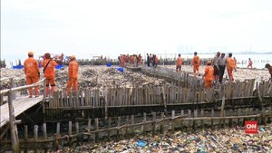 VIDEO: Pembersihan Lautan Sampah Muara Angke