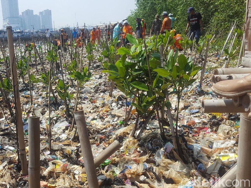 Di hari Minggu, 18 Maret 2018, petugas juga menanami bibit mangrove di lokasi tumpukan sampah itu (Foto: Zunita Amalia Putri/detikcom)