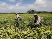 Kinerja Pabrik Gula Tradisional Rendah, Ini Buktinya