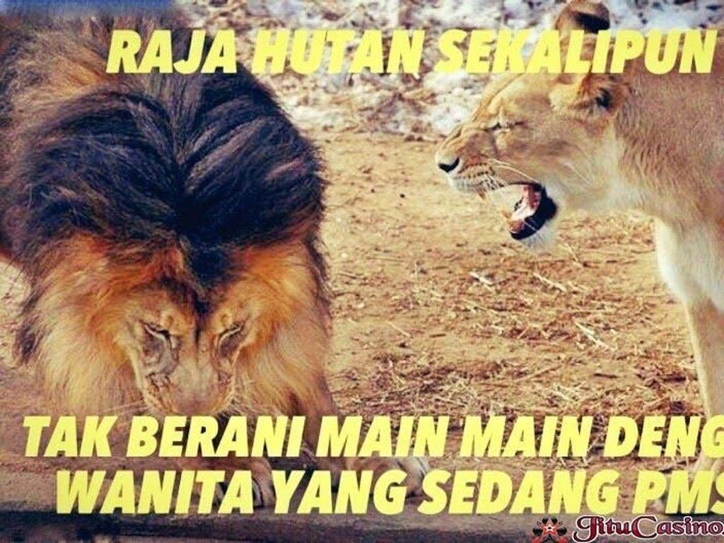 Singa sekalipun juga takut sama cewek. Foto: internet