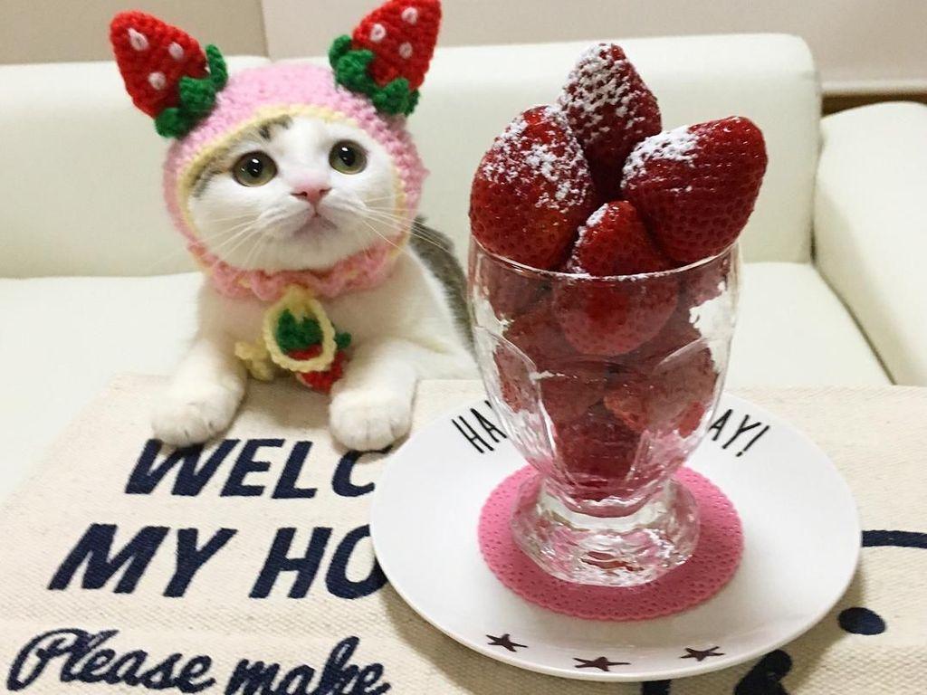 Begini 10 Gaya Kucing dengan Aksesori Makanan yang Bikin Gemas!