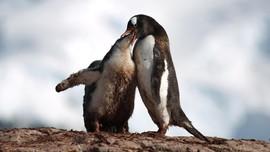 FOTO: Pinguin dan Tanah Antartika yang Terancam