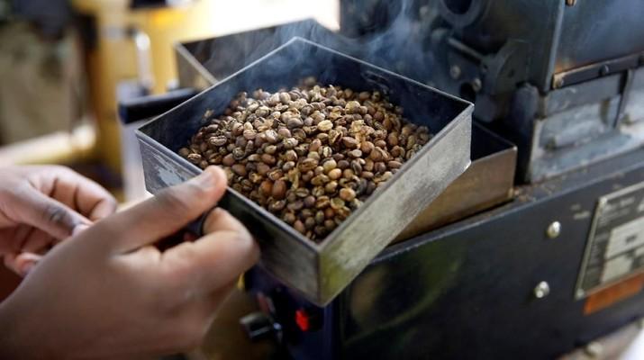 Melihat Olahan Kopi Terbaik Dunia di Pertanian Kopi Kenya