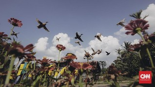 FOTO: Menjajal Fujifilm X-H1 untuk Mengabadikan Pacu Itiak
