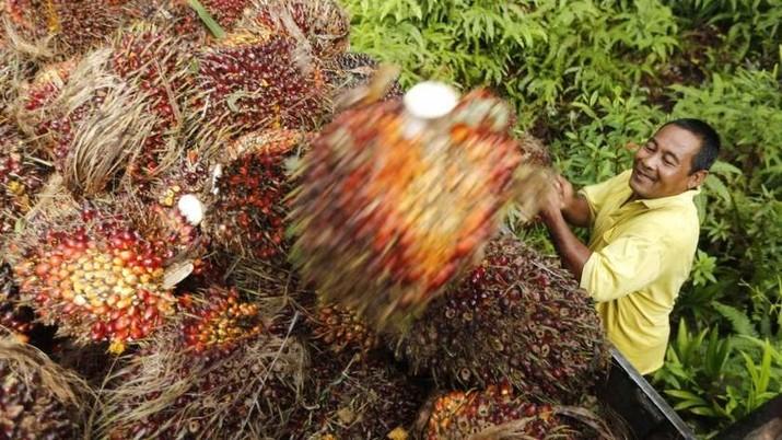 Harga CPO Jatuh, Stok Malaysia di Atas Perkiraan