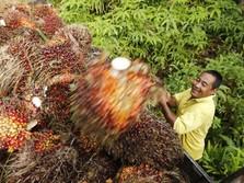 Konsumsi India & Uni Eropa Terancam Turun, Harga CPO Ambles
