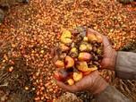 Ambyar! Harga CPO Anjok Hampir 6%, Saham Agrikultur Ambrol 8%