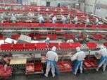 China Sedang Pusing dengan Babi, RI Masih Aman