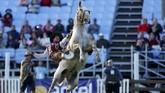 Konon pada abad ke-18 dan 19 Masehi, banyak guacho hidup nomaden di kawasan Amerika Selatan. Para pria menunggang kuda megawasi ternak mereka. (REUTERS/Andres Stapff)