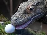 Jangan Tunda Liburan, Pulau Komodo Bakal Ditutup Mulai 2020