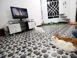 Mahasiswa Ini Ubah Rumahnya jadi Hotel Kucing Pertama di Irak