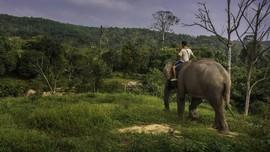 Gajah 'Bunta' Ditemukan Mati Diduga Keracunan Buah Kuweni