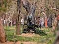 Bentrok Militer dan Separatis India di Kashmir, 15 Tewas