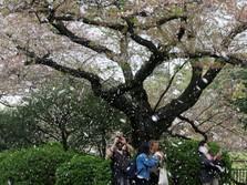 Mau Wisata ke Jepang? Februari Waktu Paling Cocok
