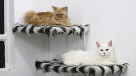 FOTO: Pondok Mewah Kucing Irak