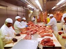 Kenapa China Pusing Soal Babi, RI Malah Menang Banyak?