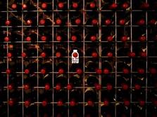 Awas Panas! China Kenakan Bea Impor 218% ke Wine Australia