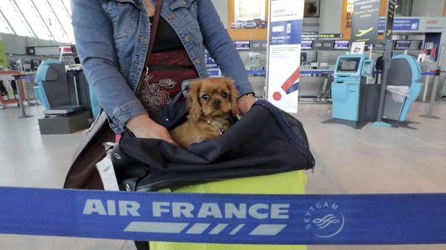 Selain pegawai kereta ( api, aksi mogok juga dilakukan para pengumpul sampah dan pekerja di Maskapai Penerbangan Perancis Air France. (REUTERS/Eric Gaillard)