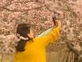 VIDEO: Mengabadikan 'Lautan' Bunga di China