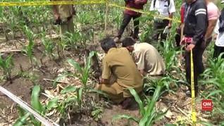 VIDEO: Fosil Gajah Purba 900 Ribu Tahun Ditemukan di Ngawi