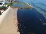 Pertamina Akui Tumpahan Minyak Teluk Balikpapan Dari Pipanya