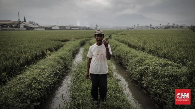 Petani asal Majalaya, Yaya menyatakan padi rusak gara-gara limbah yang masuk ke aliran Sungai Citarum. Pada Sabtu (31/3) dia menuturkan limbah sering dibuang pada malam hari. (CNNIndonesia/Adhi Wicaksono).