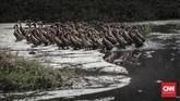 Sebagian besar lahan pertanian di Desa Sukamulya, Kecamatan Rancaekek, Kabupaten Sumedang tak luput dari pencemaran limbah. Gerombolan bebek melintas di kawasan tersebut, Sabtu (31/3). (CNNIndonesia/Adhi Wicaksono)