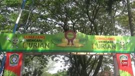 VIDEO: Menikmati Manisnya Festival Durian Lumajang