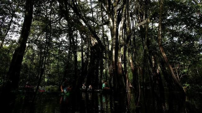 Foto Ekspedisi Macan Kumbang Amazon