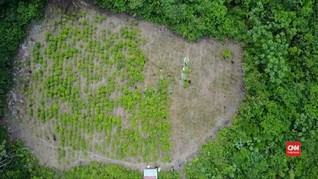 VIDEO: Desa Terpencil di Kolombia Produksi Kokain