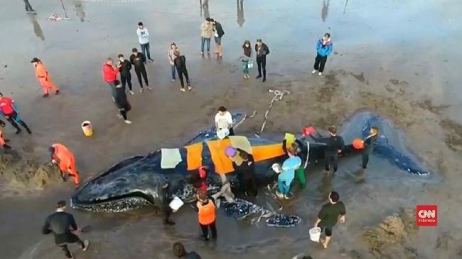 Makan Plastik, 300 Binatang Laut Thailand Mati