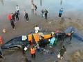 VIDEO: Paus Bungkuk Seberat 10 Ton Terdampar di Argentina