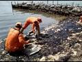Pemprov DKI Uji Labfor Cari Asal Limbah Minyak di Pulau Pari
