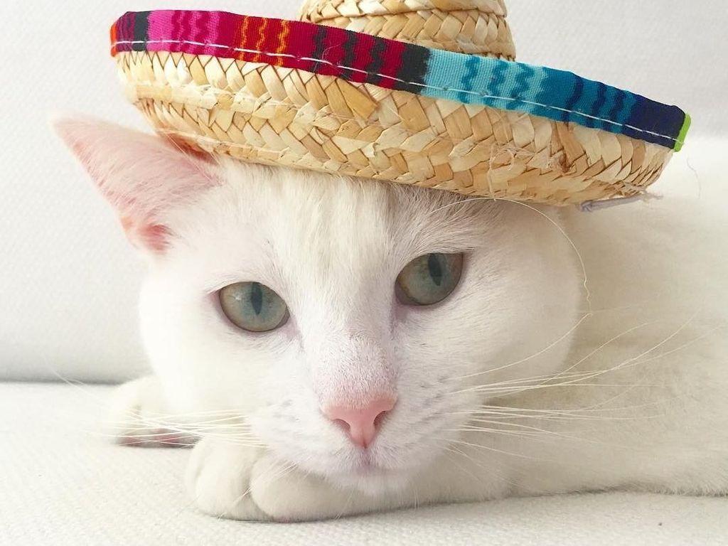 Ini Zappa, Kucing Fashionista yang Gayanya Lebih Stylish dari Kamu