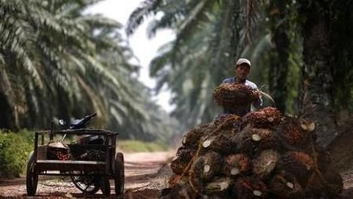 A worker unloads oil palms at a plantation outside Kuala Lumpur January 29, 2007. REUTERS/Bazuki Muhammad