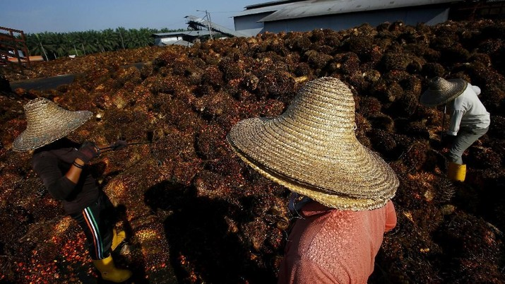 FILE PHOTO: A worker collects palm oil fruit inside a palm oil factory in Sepang, outside Kuala Lumpur in this June 18, 2014 file photo.  REUTERS/Samsul Said