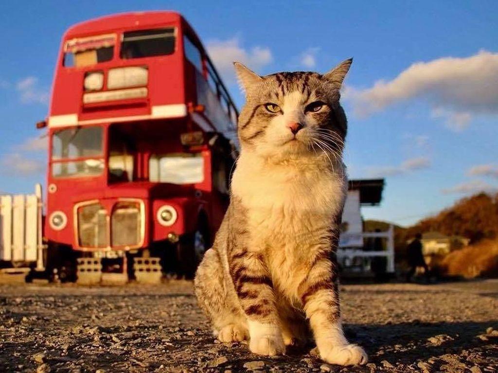 Kucing bergaya model ini viral di media sosial. Foto: Instagram Noraneko Nyankichi